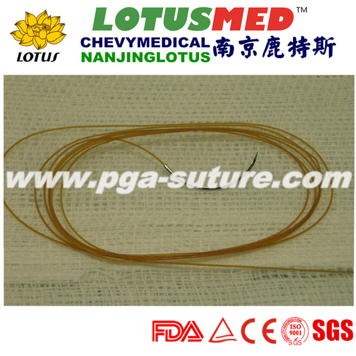 Plain Catgut Suture without needle